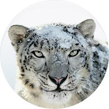 Mac OSX Snow Leopard Server