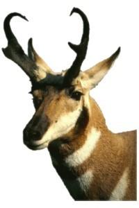 Antelope Rent-A-Computer